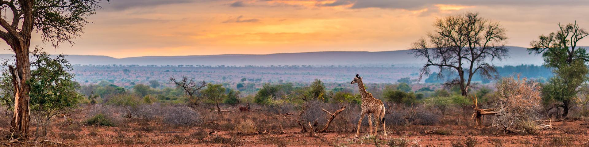 Kruger national park hero