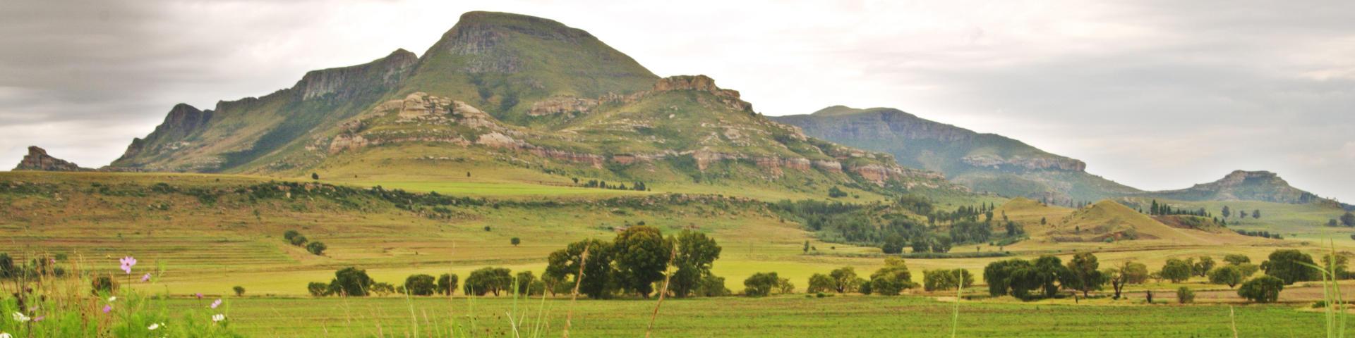 Bloemfontein hero