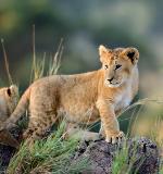 Wild is Life Sanctuary