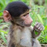Chipangali Wildlife Orphanage