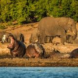 Mokolodi Game Reserve