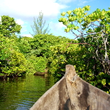 Honko Community-Based Mangrove Reserve