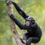 Chimfunsi Wildlife Orphanage
