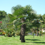 Bois Sainte Anastasie