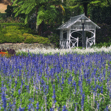 Wellington Botanic Garden