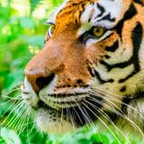 East London Zoo