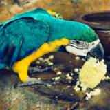 Port Harcourt Zoo