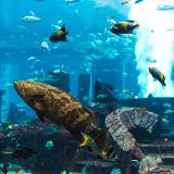 معرض دبي للأحياء المائية وحديقة الحيوانات تحت الماء