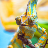 Madagascar Exotic