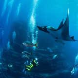 Manta Reef and Gallaria