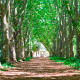 Kwa Zulu-Natal National Botanical Gardens