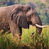 Niassa National Reserve