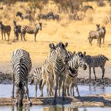 Mahangu Game Reserve