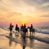 Romantic Horse Rides