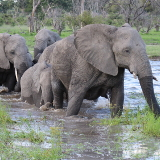 Mosu Safari Tours