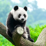 Chóngqìng Zoo
