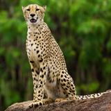 Inkwenwezi Private Game Reserve