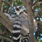 Antananarivo Lemur Park