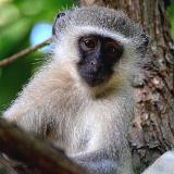 Mantenga Nature Reserve