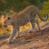 Thulu Thula Game Reserve