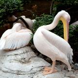 Dalian Forest Zoo