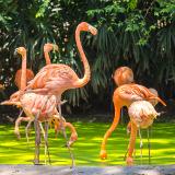Safari World Park