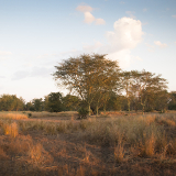 Gorongosa National Park