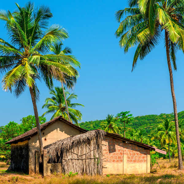 Old Coconut Plantation