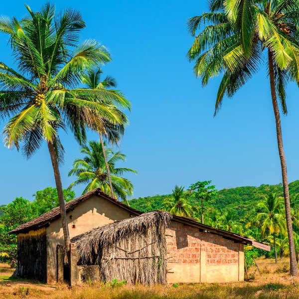 Old Coconut Plantation