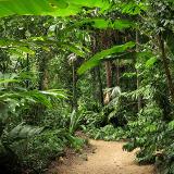Flecker Botanical Gardens