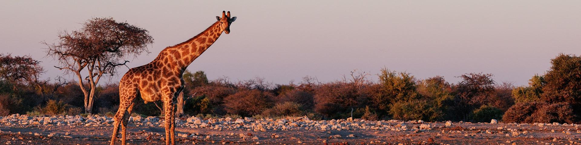 African Flights