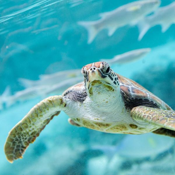 comoros-marine-life