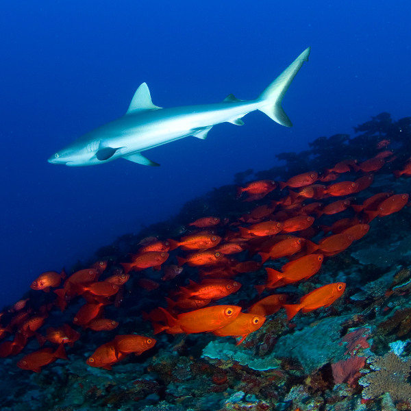 marshall islands spectacular diving