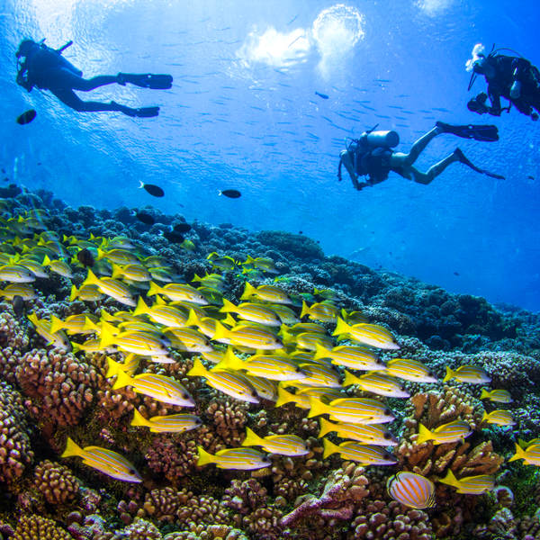 tuvalu majestic diving