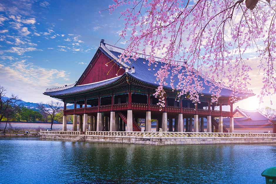 traditional south korean Hanok near the water with cherry blossom trees