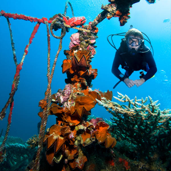 micronesia diving