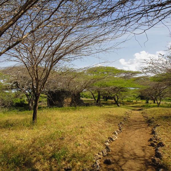 Lamu Nature