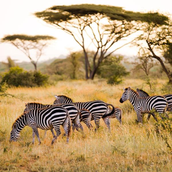gombe-savannah-views