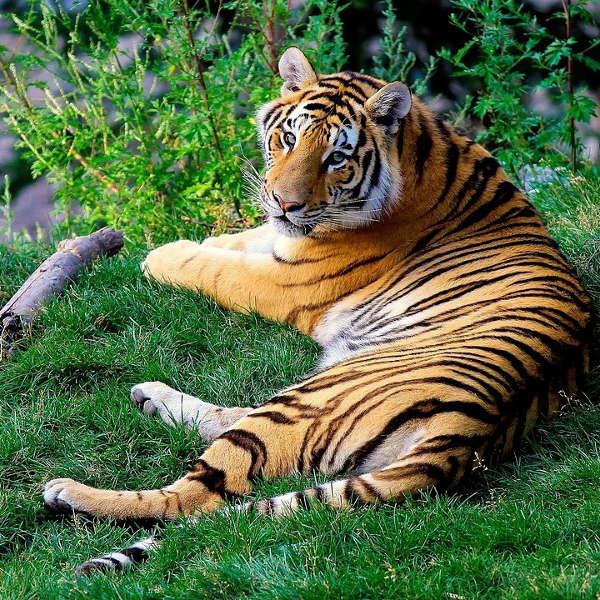 omaha_zoo