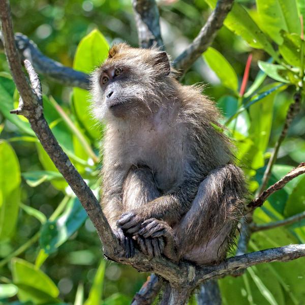 monkey-forest-rwanda