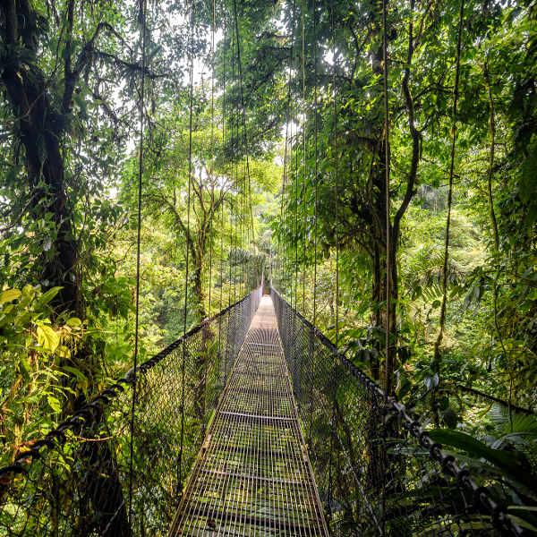 guyana wild adventures