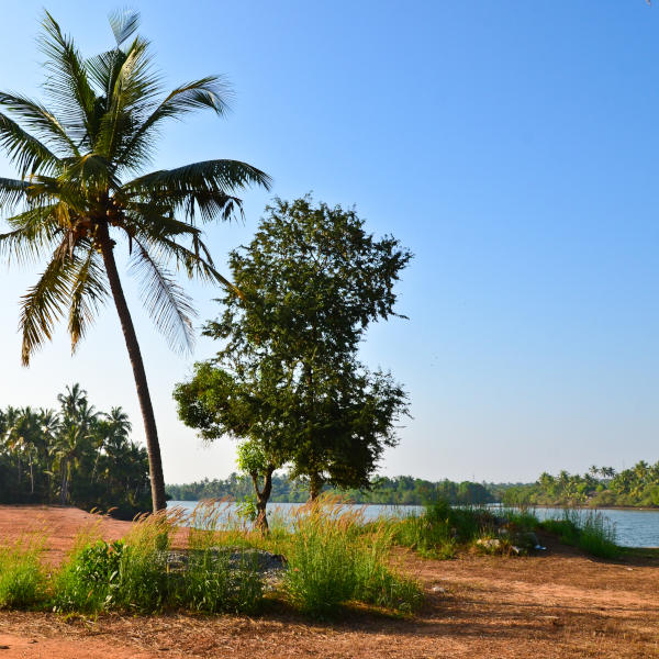 A serene scene at Shambhavi River near Mangalore