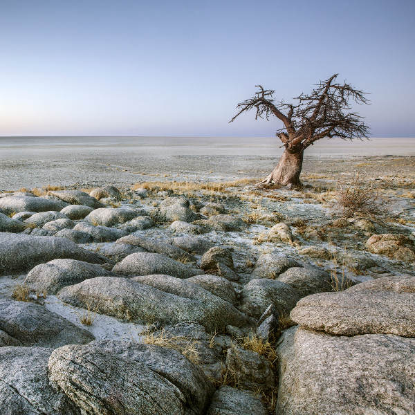 Maun Salt Pans and Tree