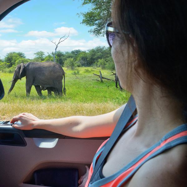 Safari Elephant Eldoret