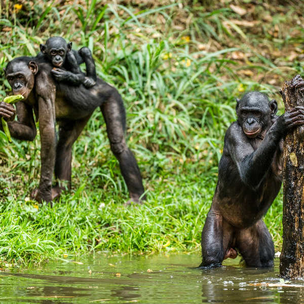 Monkey Island Monrovia