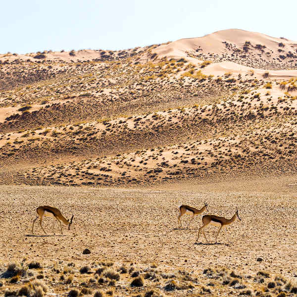 ondangwa desert landscape