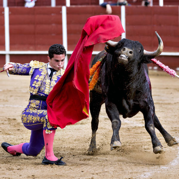 matador bullfighting bull