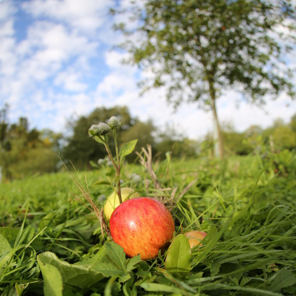 red apple on grass