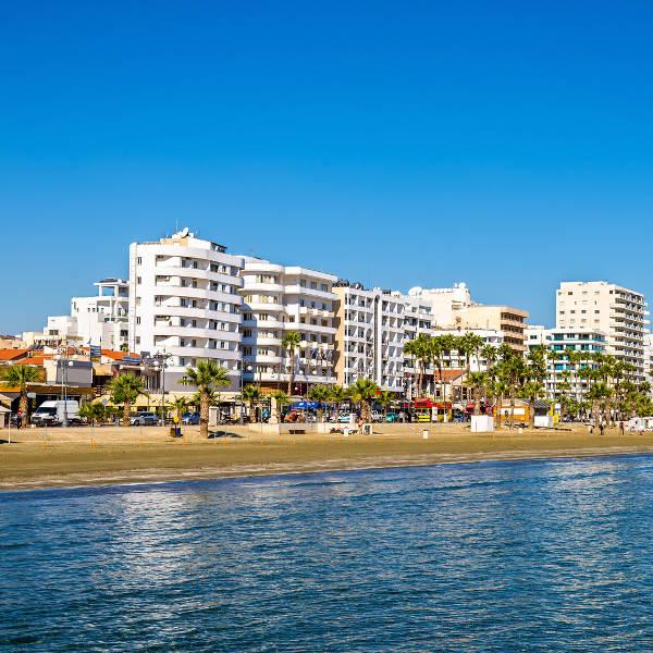 palm tree beachfront