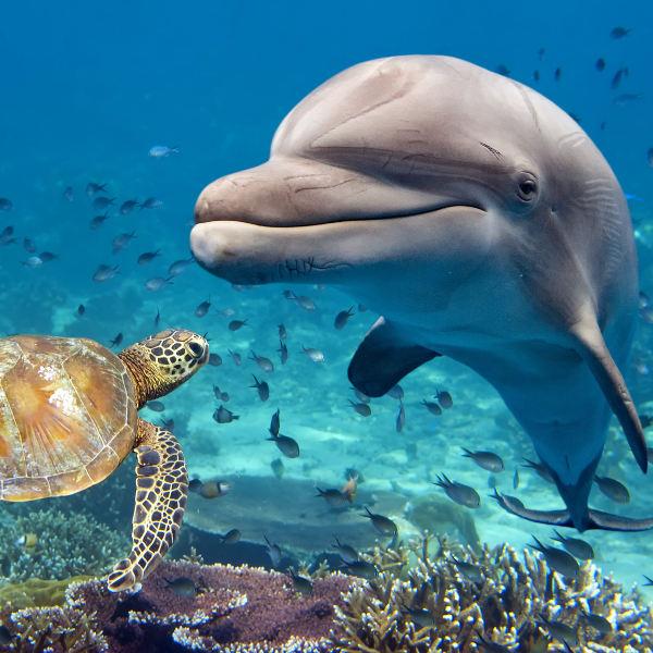 marine-dolphins-tenerife